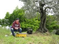 Ich und mein Olivenbaum - ein perfekter Platz zum Malen